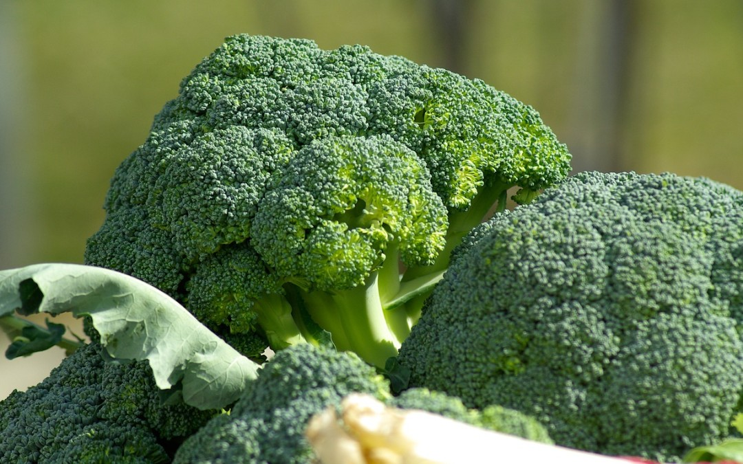 6 Amazing Benefits to Eat More Broccoli